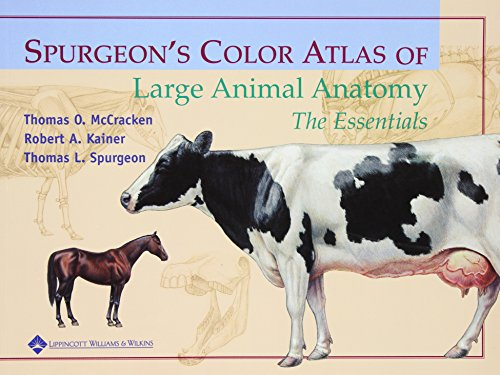 9780683306736: Spurgeon's Color Atlas of Large Animal Anatomy: The Essentials
