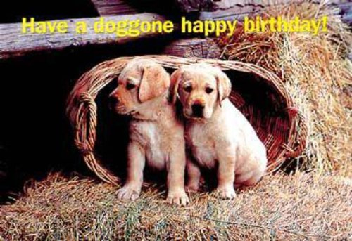 Happy Birthday Puppies Postcard (Package of 25) (0687072530) by Abingdon Press