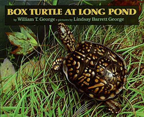 Box Turtle at Long Pond Format: Hardcover
