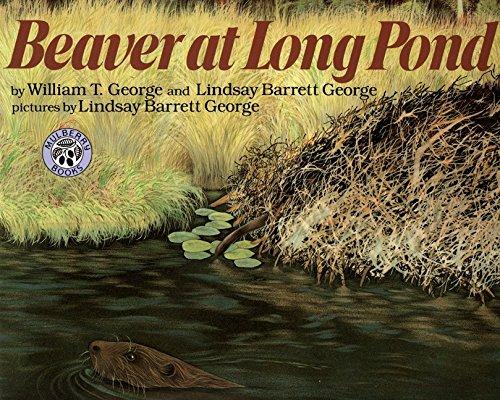 9780688175191: Beaver at Long Pond