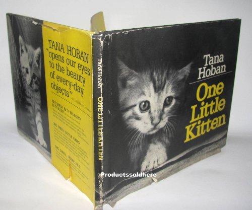 9780688802226: One Little Kitten