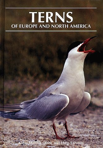 9780691043876: Terns of Europe and North America