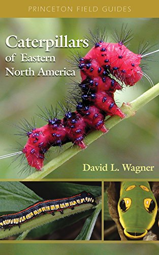 Caterpillars of Eastern North America: A Guide: David L. Wagner