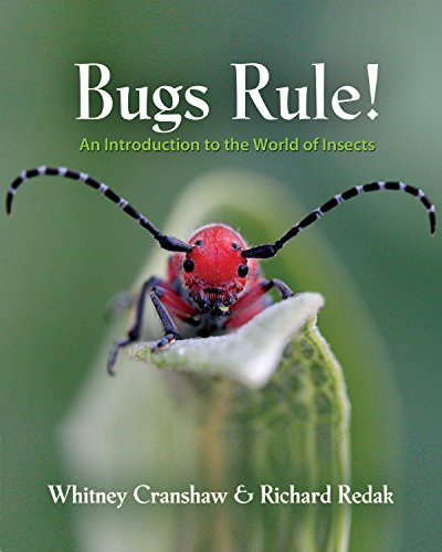 9780691124957: Bugs Rule!: An Introduction to the World of Insects