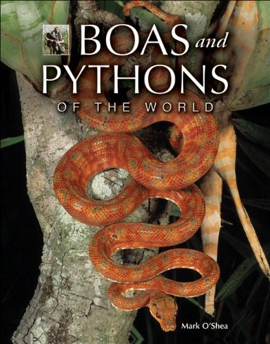 9780691131009: Boas and Pythons of the World