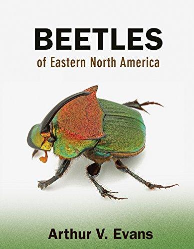 Beetles of Eastern North America (Paperback): Arthur V. Evans