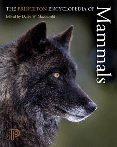 9780691140698: The Princeton Encyclopedia of Mammals
