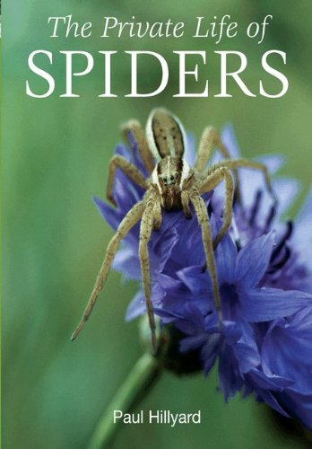 9780691150031: The Private Life of Spiders