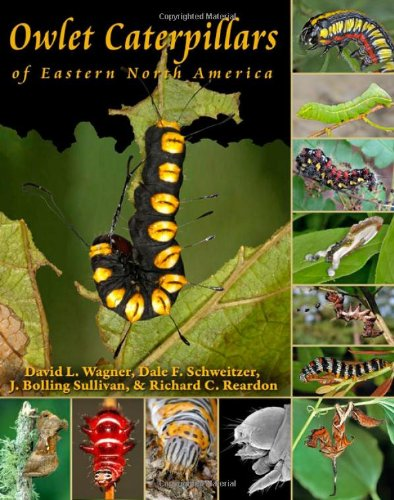 9780691150420: Owlet Caterpillars of Eastern North America