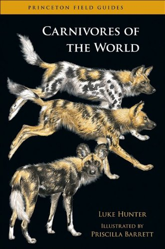 9780691152271: Carnivores of the World (Princeton Field Guides)