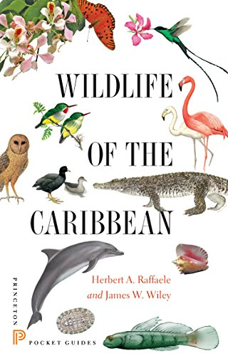 9780691153827: Wildlife of the Caribbean (Princeton Pocket Guides)
