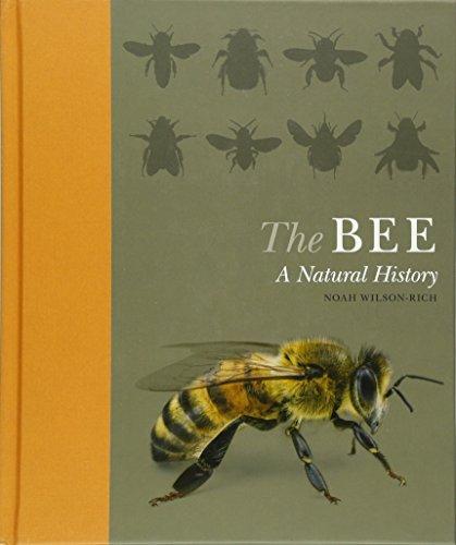 The Bee A Natural History: Wilson-Rich, Noah