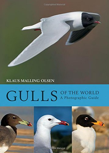 9780691180595: Gulls of the World: A Photographic Guide