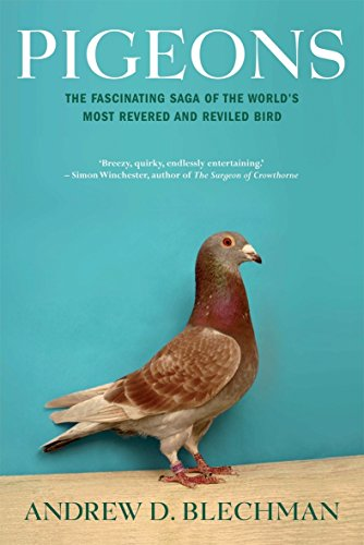 Pigeons - the Fascinating Saga of the World's most revered and Reviled Bird: Andrew D Blechman