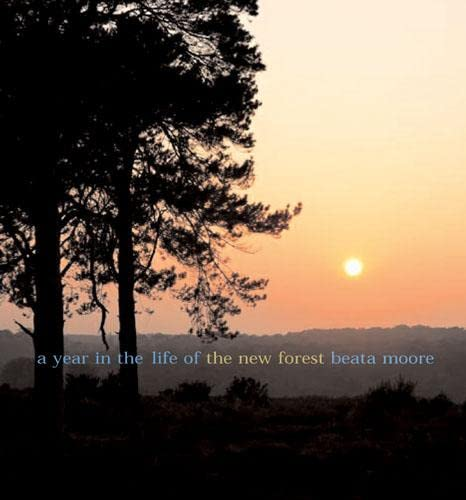 A Year in the Life of the New Forest