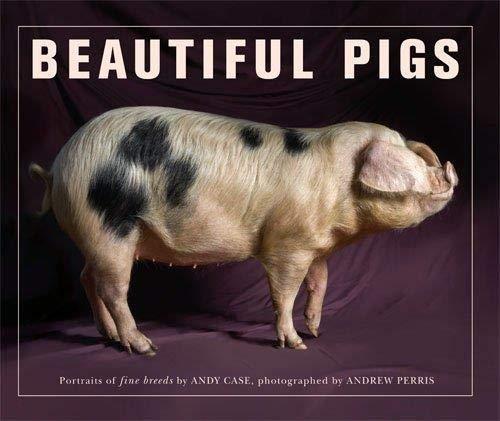 9780711230590: Beautiful Pigs