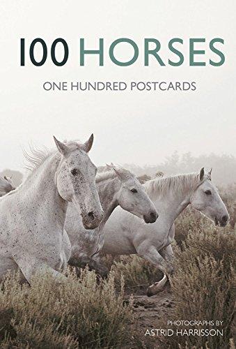 9780711235670: 100 Horses: One Hundred Postcards