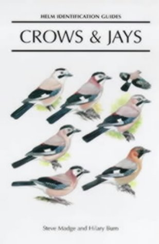 Crows and Jays (Helm Identification Guides)