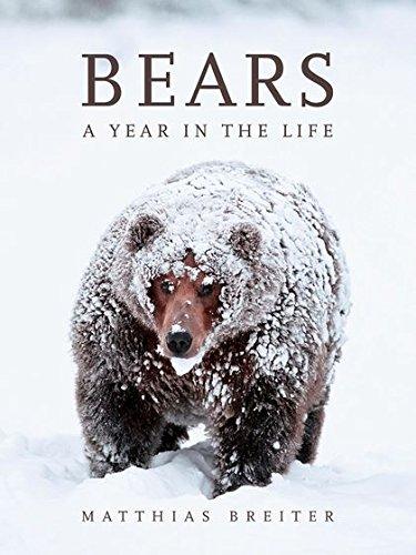 9780713687125: Bears