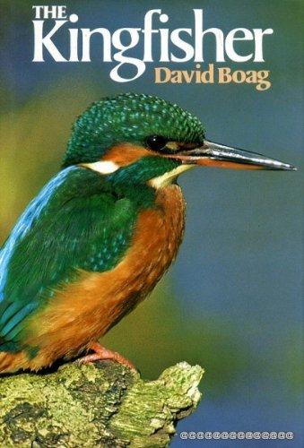 9780713711707: The Kingfisher