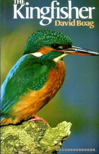 9780713720181: The Kingfisher