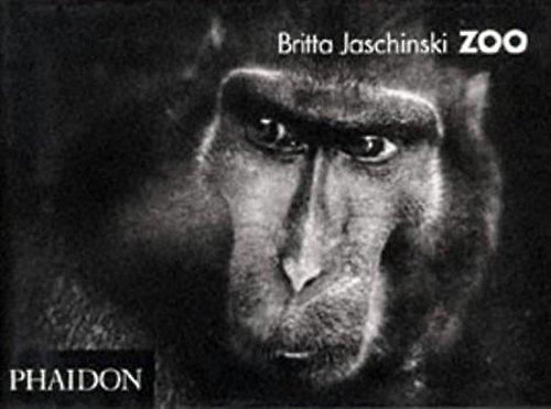 9780714834726: Zoo