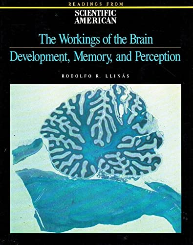 9780716720713: The Workings of the Brain: Development, Memory, and Perception (Readings from Scientific American)