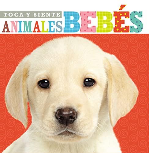 9780718033224: Toca y siente animales bebés (Spanish Edition)
