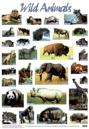 9780721755502: Wild Animals (Laminated posters)