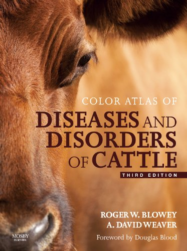 9780723436027: Color Atlas of Diseases and Disorders of Cattle Text and Evolve eBooks Package, 3e