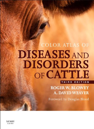 9780723437789: Color Atlas of Diseases and Disorders of Cattle, 3e
