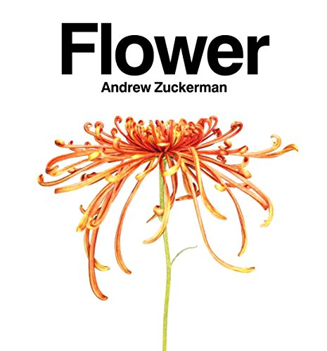 9780733629587: Flower