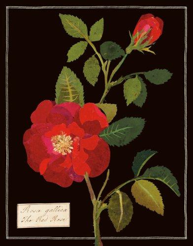 9780735336308: Mary Delany Paper Florals Keepsake Box