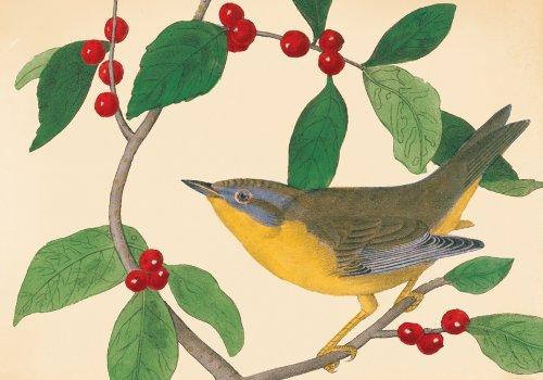 9780735337831: Audubon Holiday Bird Boxed Holiday Half Notecards