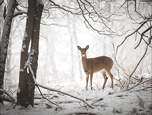 9780735344167: Doe in the Forest Large Embellished Holiday Notecards