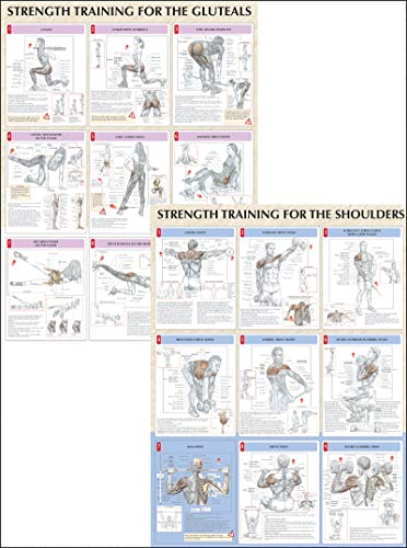 9780736059312: Strength Training Anatomy Poster Series