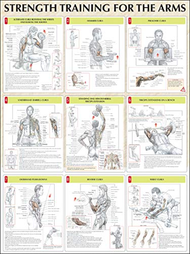 9780736059336: Strength Training for the Arms Poster