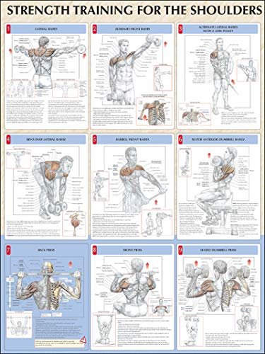 9780736059343: Strength Training for Shoulders Poster (Strength Training Anatomy)