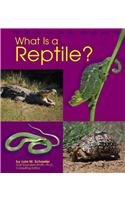 9780736808682: What Is a Reptile? (The Animal Kingdom)
