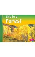 9780736834001: Life in a Forest (Living in a Biome)