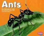Ants (Bugs, Bugs, Bugs!): Hall, Margaret