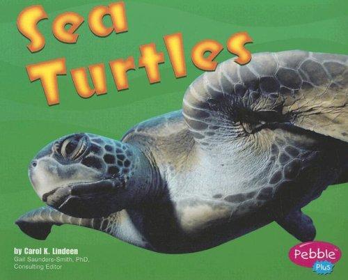 Sea Turtles (Under the Sea)