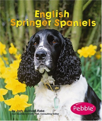 English Springer Spaniels (Dogs): Jody S. Rake