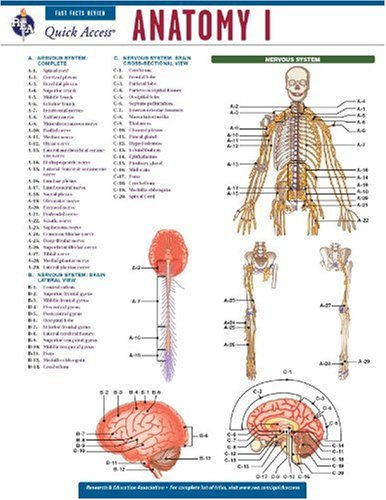9780738607672: Anatomy 1 - REA's Quick Access Reference Chart (Quick Access Reference Charts)