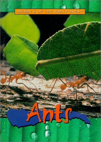 Ants (Animals of the Rain Forest): Christy Steele