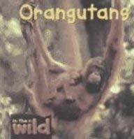 9780739866368: Orangutans (In the Wild)