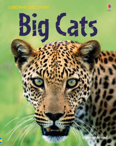 9780746096437: Big Cats (Discovery)