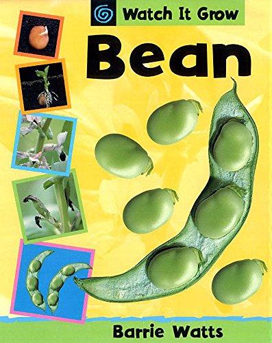 9780749654283: Bean