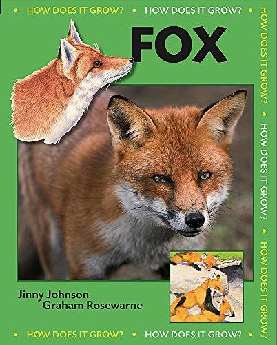 9780749687854: Fox (How Does it Grow?)
