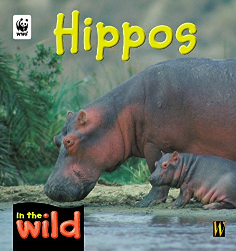 9780750242301: Hippos (In the Wild)